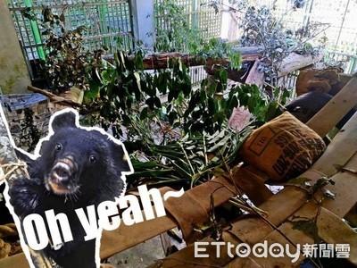 照養員豐富環境 讓黑熊玩捉迷藏