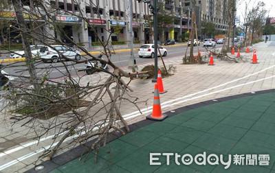 強風吹倒路樹 新竹迪卡儂前壓孕婦