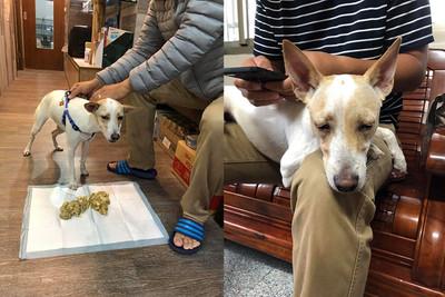 愛犬吃掉整盤洋蔥 媽嚇壞急送醫
