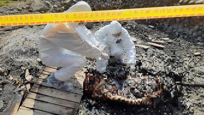 樹林燒到病死豬 檢驗非洲豬瘟為陰性