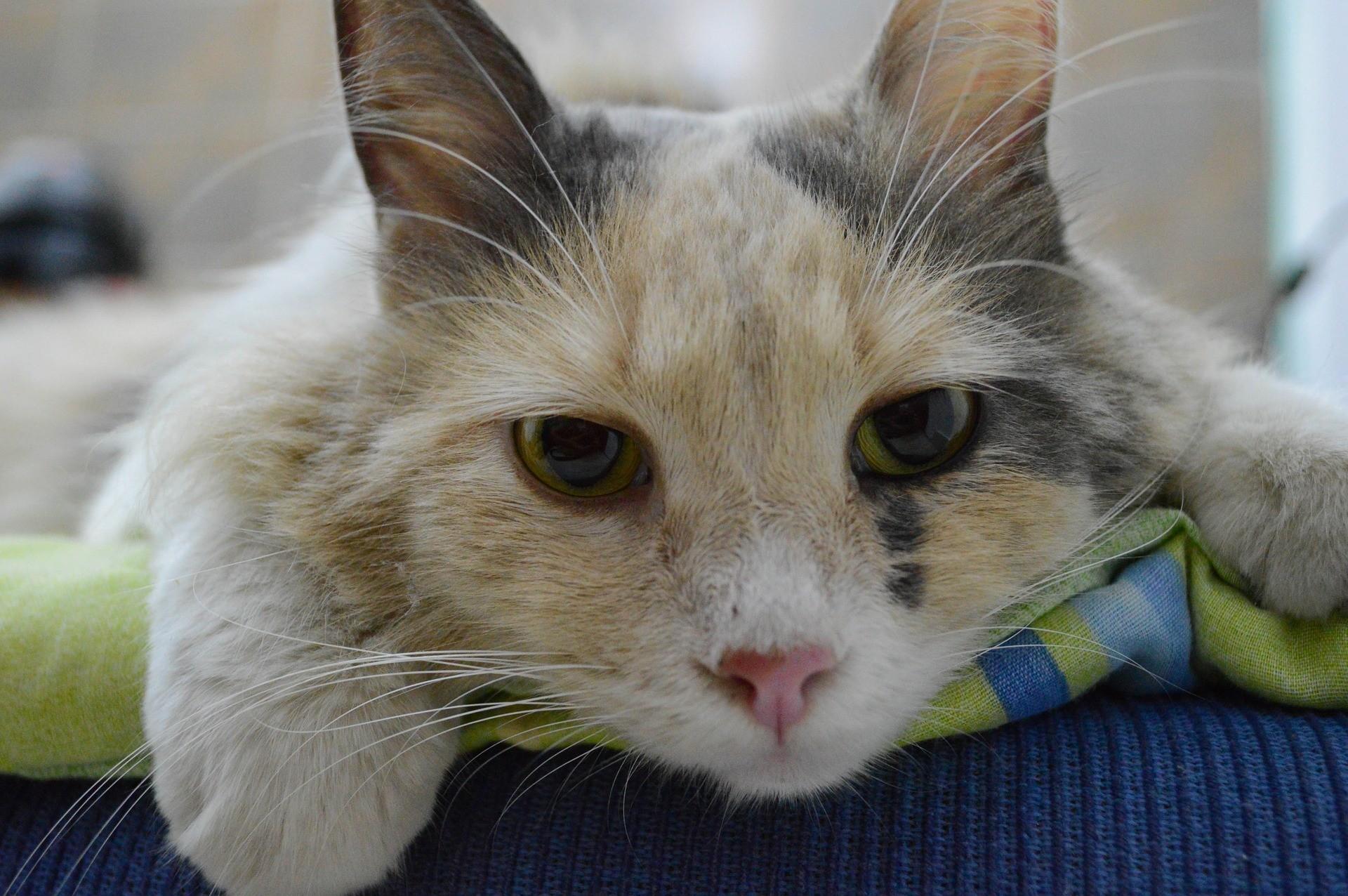 ▲貓,貓主子,獸醫診所,貓生病。(圖/取自免費圖庫Pixabay)