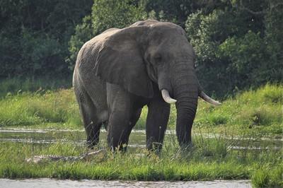 蘇門答臘象身首分離慘死 全球剩不到2千隻