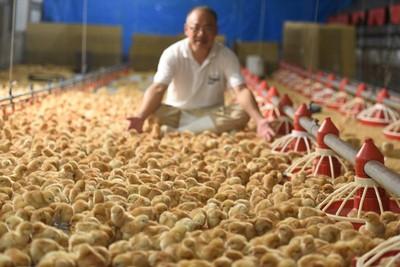 量販業者亞洲首賣「非籠飼雞蛋」