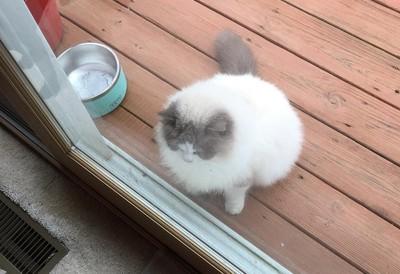 鄰居貓突然敲門 開門驚覺牠被棄養