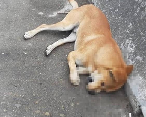 ▲狗兒從高架道路上掉落砸中蘇男的車。(圖/翻攝自Facebook/我愛鹿港小鎮)