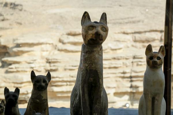 ▲▼ 埃及23日公開展出大量動物木乃伊。(圖/路透)