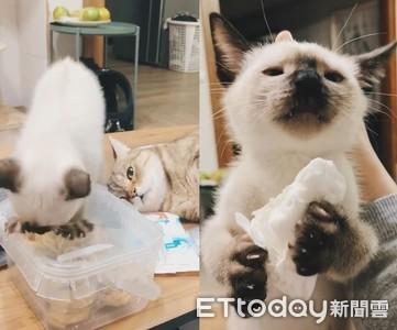 貓開箱蛋捲失敗!偷擦過衛生紙吃