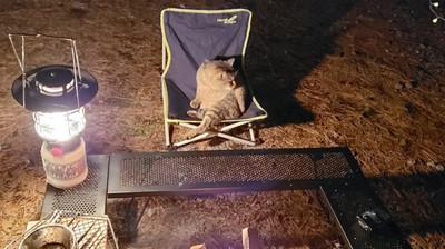 露營去洗碗被胖貓「大叔坐」搶位