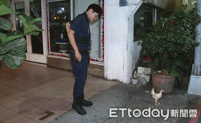 夜半巡邏接報案 員警竟要抓落跑雞
