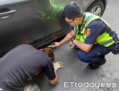 台南佳里警搶救貓咪大作戰
