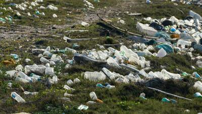《獅子王》美景不再!塑膠垃圾已吞噬地球 雛鳥體內取出276碎片