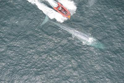 測到藍鯨心跳 解開最大動物之謎