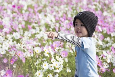 嘉市花海節遍地開花超美麗