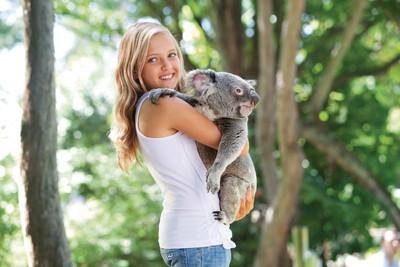 就在昆士蘭萌萌無尾熊抱個夠!