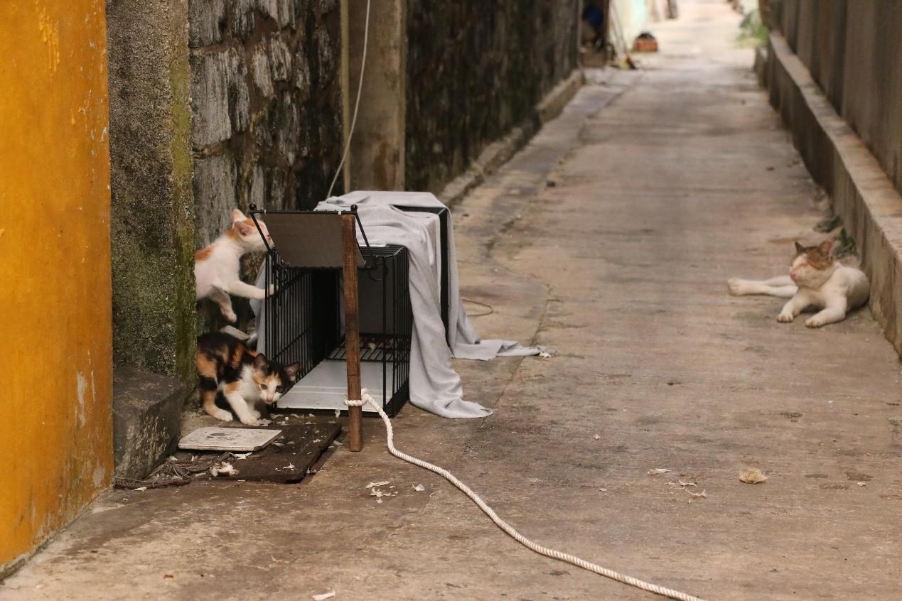 ▲(圖/台灣之心愛護動物協會提供,請勿隨意翻拍,以免侵權,下同。)