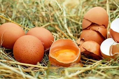 行政院:今年雞蛋產品列稽查重點