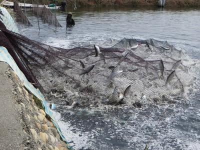養殖漁業提前做好防寒措施