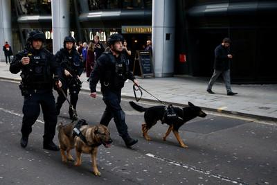 警犬咬傷2警員 鼠蹊部比大腿受傷償金少