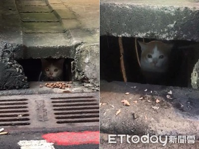 浪貓住下水道探頭瞬間撞臉《牠》