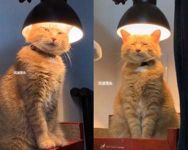 貓燙頭毛?突鑽檯燈「閉眼練功」
