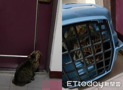 隔壁貓「離家出走」!鄰居幫關籠