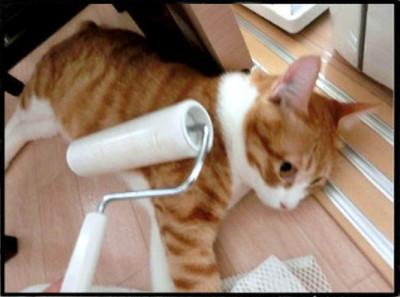 聽說貓咪界最近很流行「滾輪按摩」哦