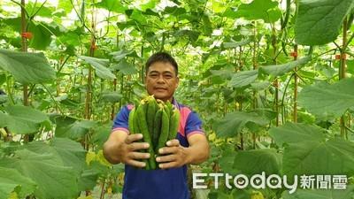 電子業換跑道 陳志雄網室種小黃瓜
