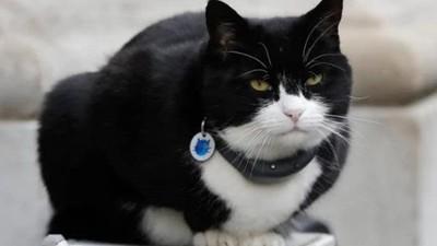 「首席捕鼠官」吃太肥被迫退休!英外交部公務員狂餵食,疼牠卻也害了牠