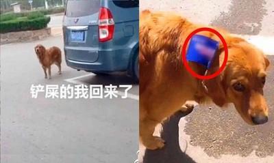 狗偷跑出去玩!脖子多了欠款字條