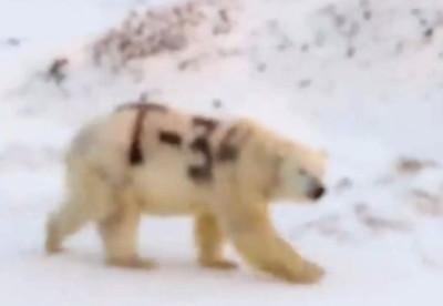 北極熊身上被噴黑色大字「T-34」