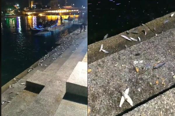 韓國瑜回防「愛河魚群跳出水」!韓粉嗨炸:一睹龍顏…高雄市府去查了