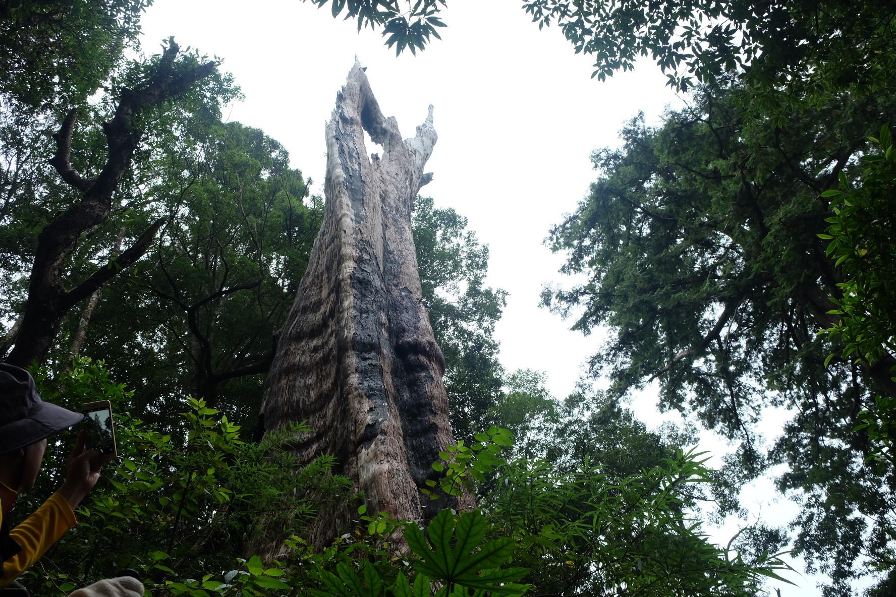 ▲▼北得拉曼巨木步道。(圖/N²提供,請勿隨意翻拍,以免侵權。)