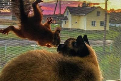 掰咖松鼠獲救 竟和貓變最好朋友