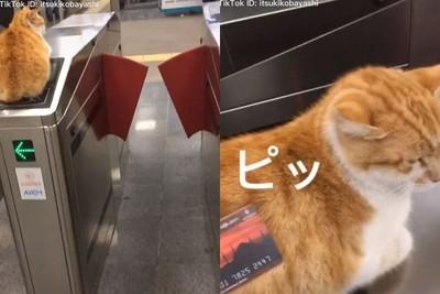 貓懶躺地鐵嗶卡區 結局驚呆9萬網友