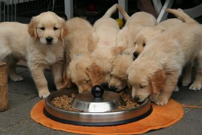 英國狗媽媽自然產 一次生21隻幼犬