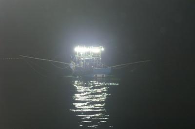 增加漁船10%漁獲量!專家首提供鎖管預報