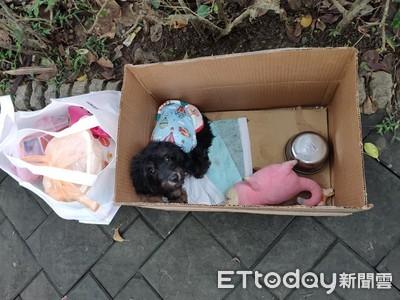 寒風中被丟公園 小狗無助縮紙箱