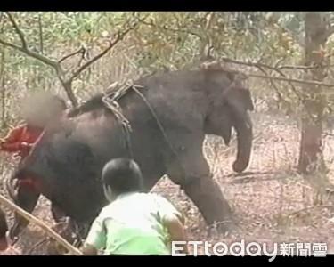 大象遭綁強迫跪下 只為供人騎乘娛樂