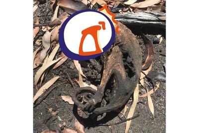 看遍動物屍體 澳洲大火志工需心理諮商