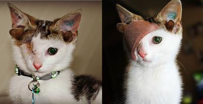 出生有4耳朵!獨眼貓隨時啾咪萌翻