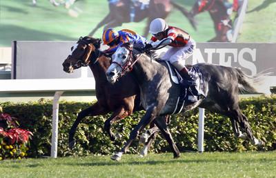 香港遊行日 賽馬投注破紀錄成長30%