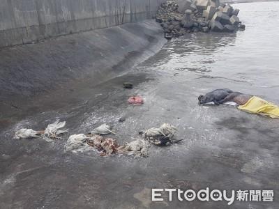 彰化大城再現2死豬、19隻死雞鵝