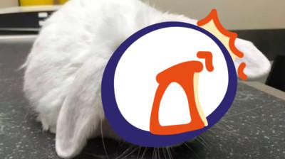 兔耳長歪變獨角獸 認養電話被打爆