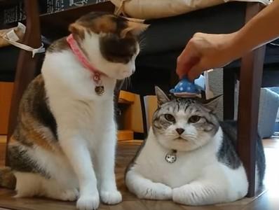 奴才給主子戴帽 小弟貓一拳揮掉