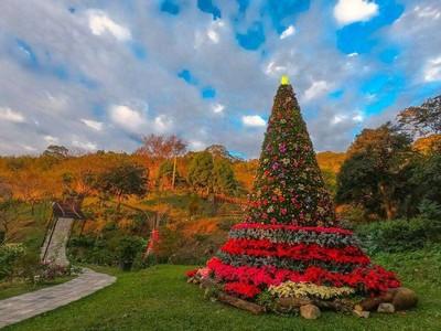 海拔最高「聖誕樹」在桃園山城!