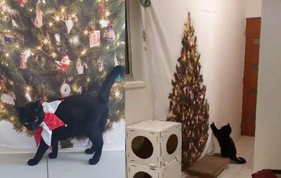 愛貓每年撂倒聖誕樹!她出奇招壓制