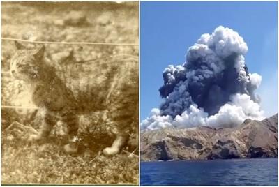 懷特島上人類全活埋 只剩一隻貓