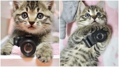 讓本喵幫你拍照!奶貓握「扭蛋相機」拍照 萌到貓奴都想搶購