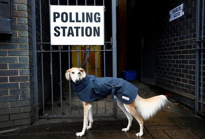 英國投票傳統 帶著狗狗一起