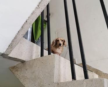 狗狗出門迎接外送員 他愣30秒噴淚
